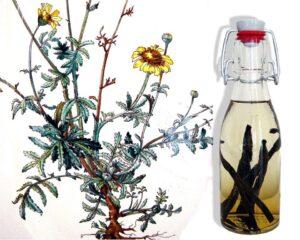 Zelfgemaakte vanille-extract